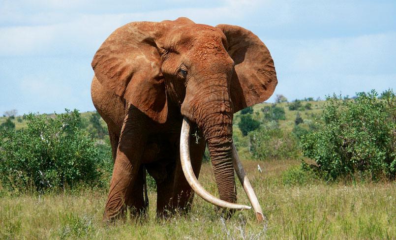 EMAP – Elephant Monitoring and Anti-Poaching, Kenya