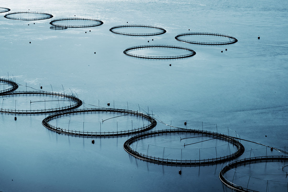 Fish Farm, Faroes