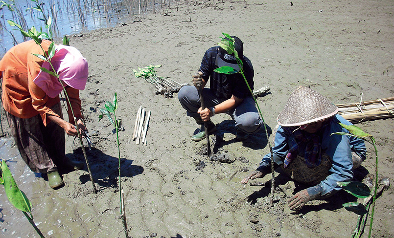 A group of people busy planting in Banda Aceh