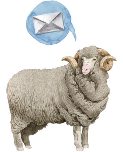Suston newsletter sheep