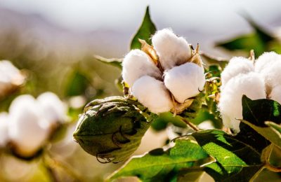 FAQ: Organic Cotton