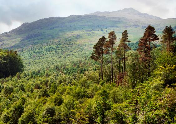 Restoring Hardknott Forest, UK